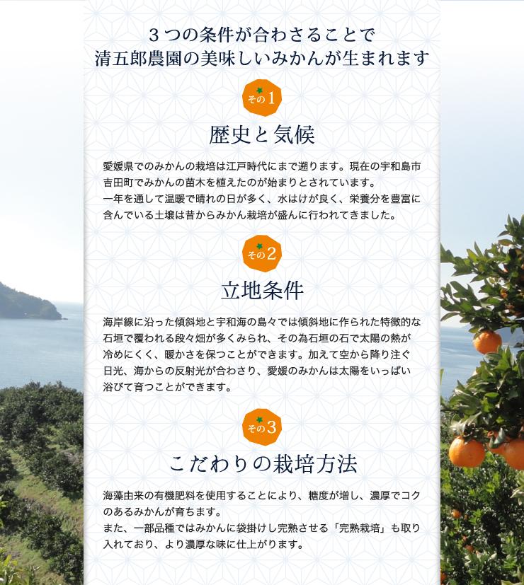 3つの条件が合わさることで清五郎農園の美味しいみかんが生まれます。歴史と気候。立地条件。こだわりの栽培方法