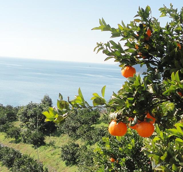 宇和島の海産物・農産物をより多くのお客様に楽しんで頂けるよう、心を込めてお届けします!